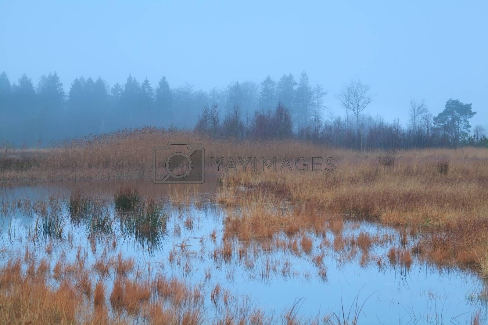 misty overcast weather on swamp, Mandefijld, Friesland, Netherlands