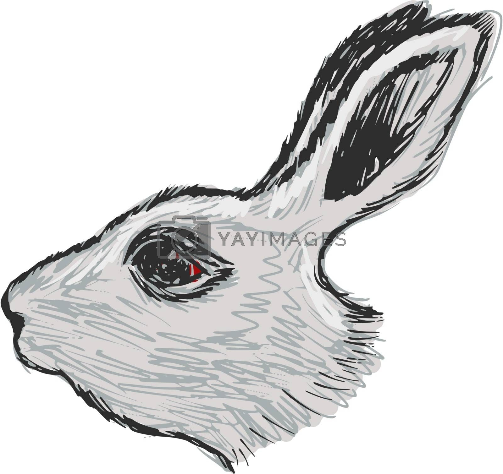 Royalty free image of head of rabbit by Perysty