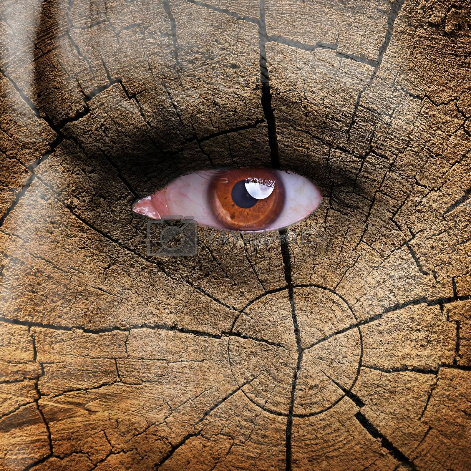 Nature concept - man face covered with wood texture
