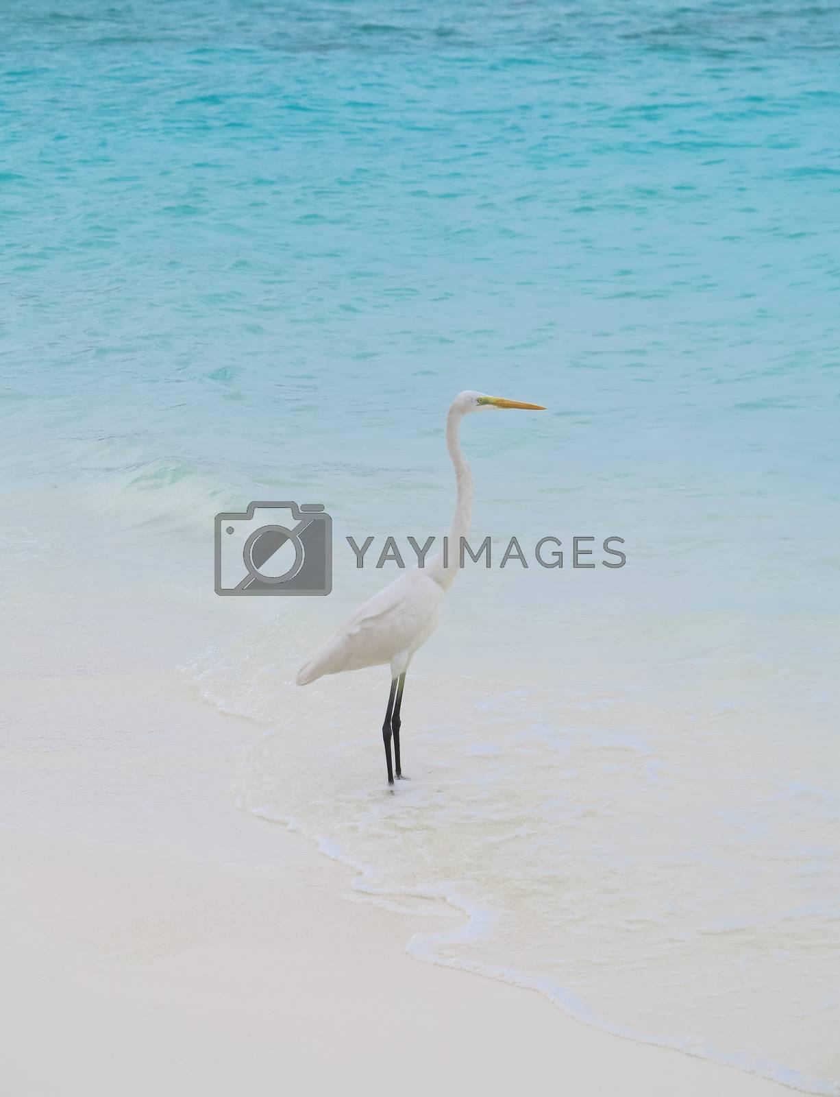 Grey Heron stands on the beach near the sea