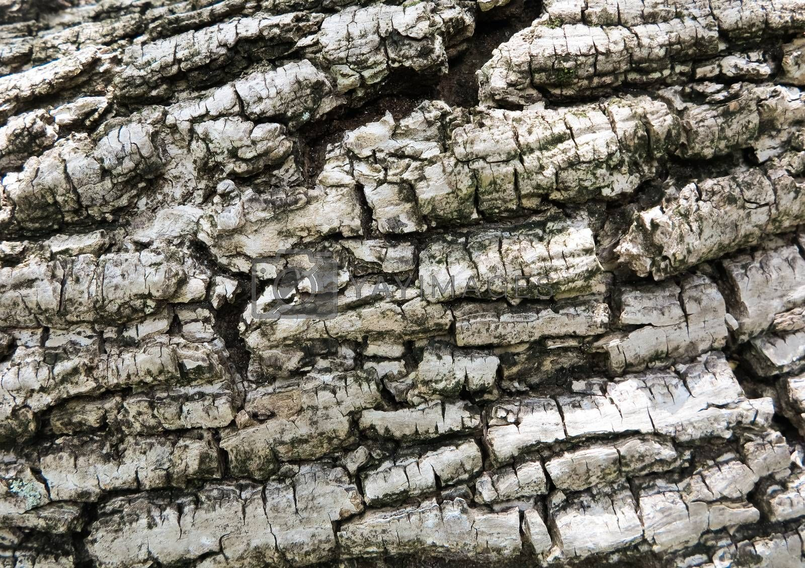 Texture of bark in the beach