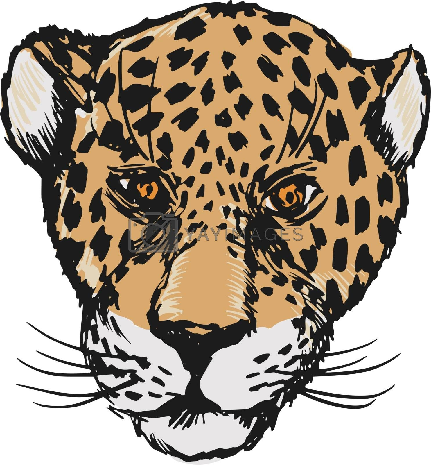 Royalty free image of jaguar by Perysty