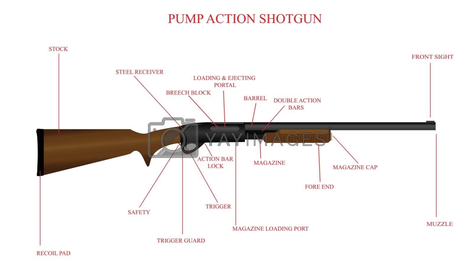 Royalty free image of Labeled Shotgun Diagram by fallesenphotography