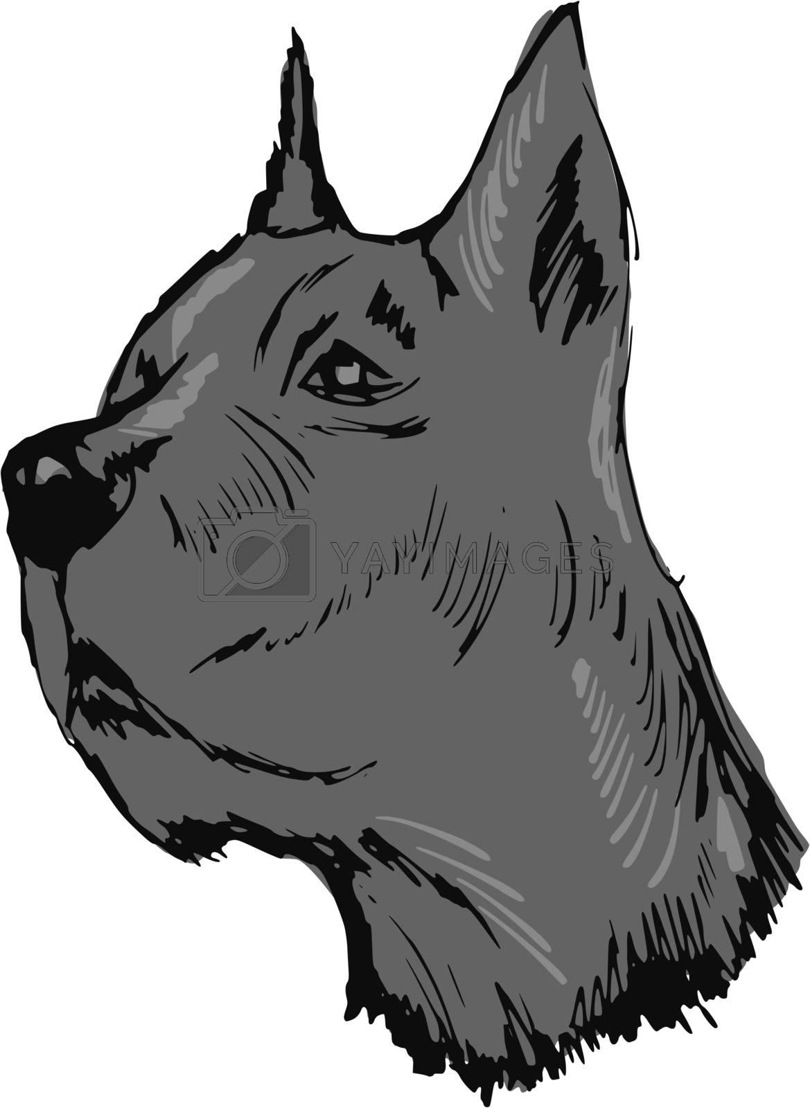 hand drawn, sketch, cartoon illustration of great dane