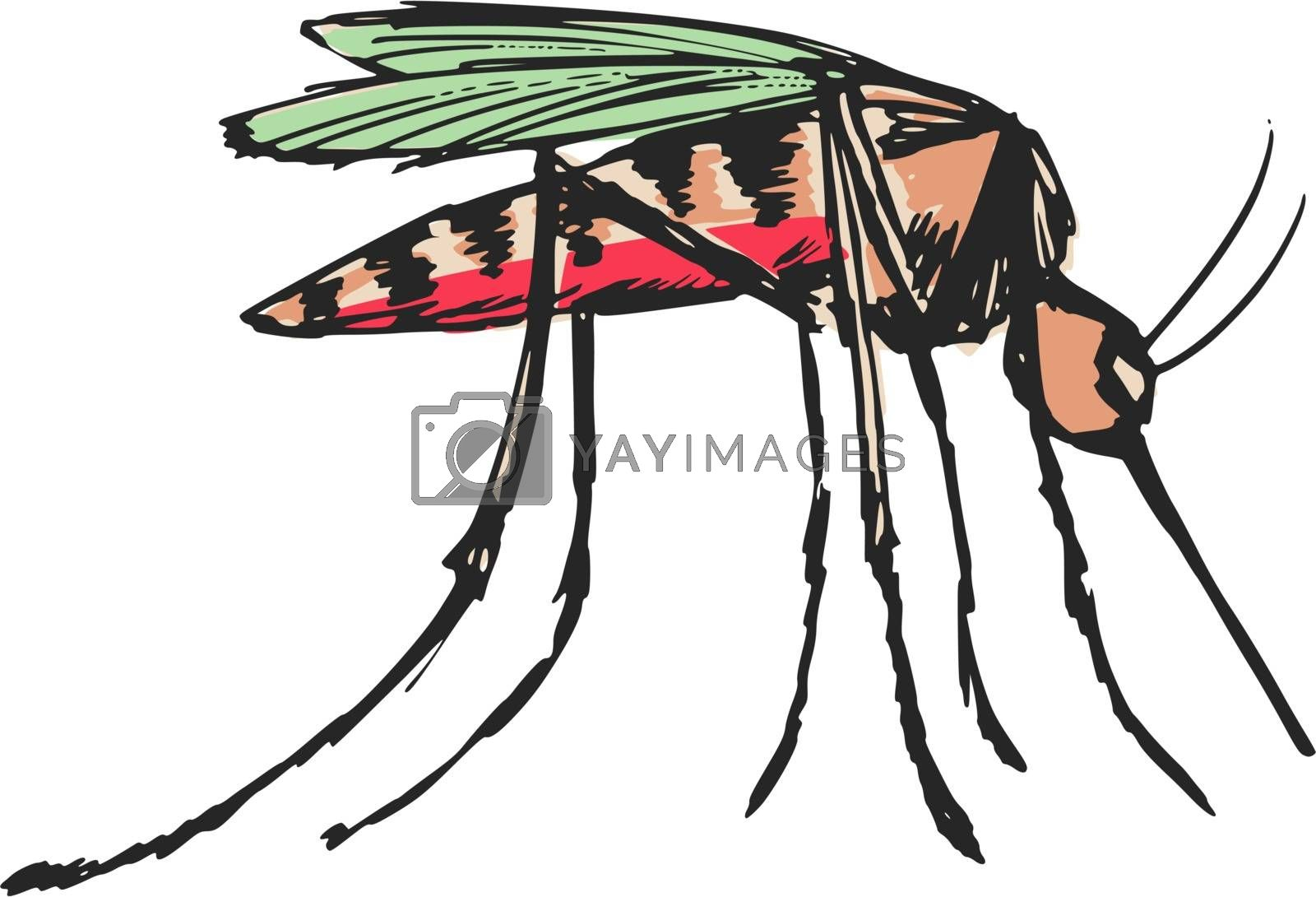 Royalty free image of mosquito by Perysty