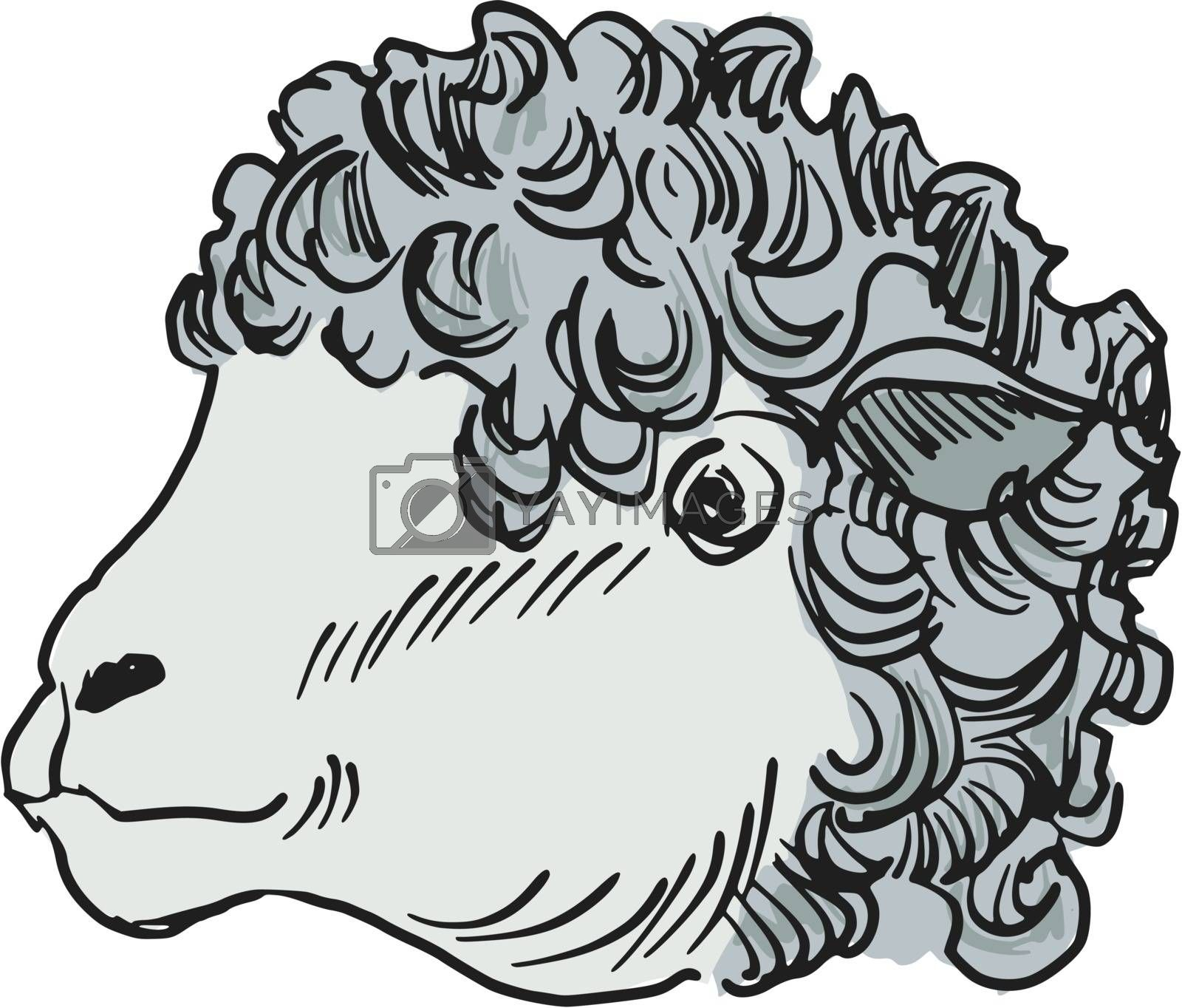 hand drawn, sketch, cartoon illustration of sheep