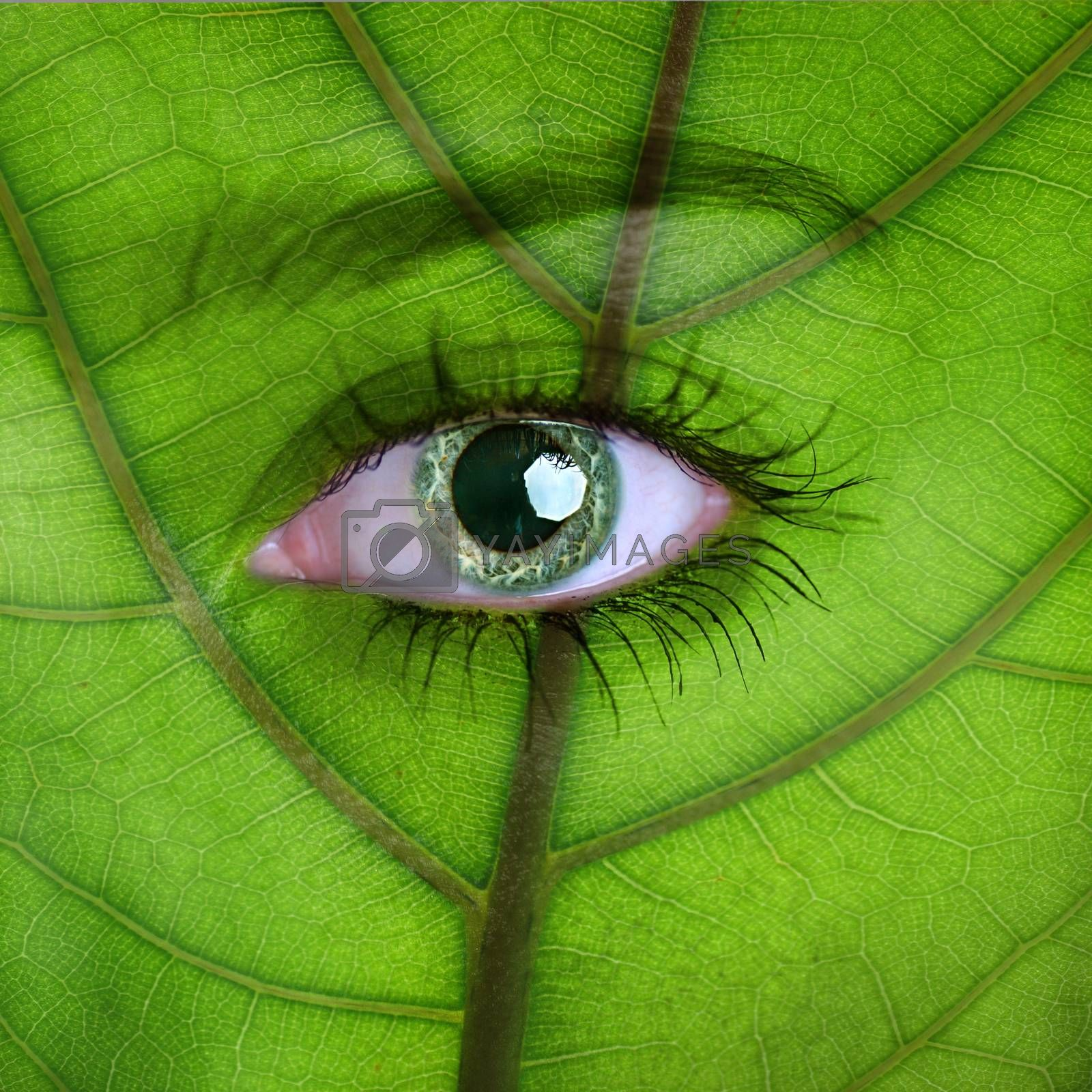 Nature concept - woman face covered with green leaf texture