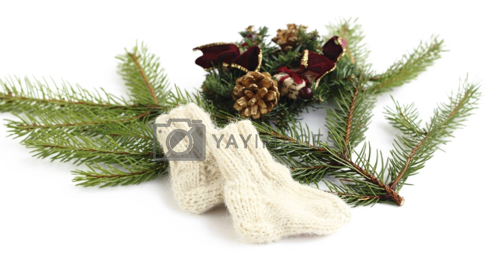 baby knitted woolen socks near spruce branches