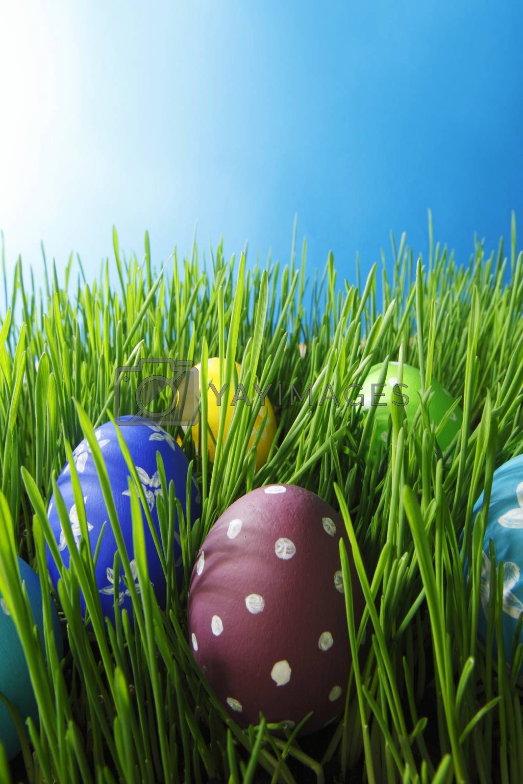 Easter eggs in grass by Yellowj
