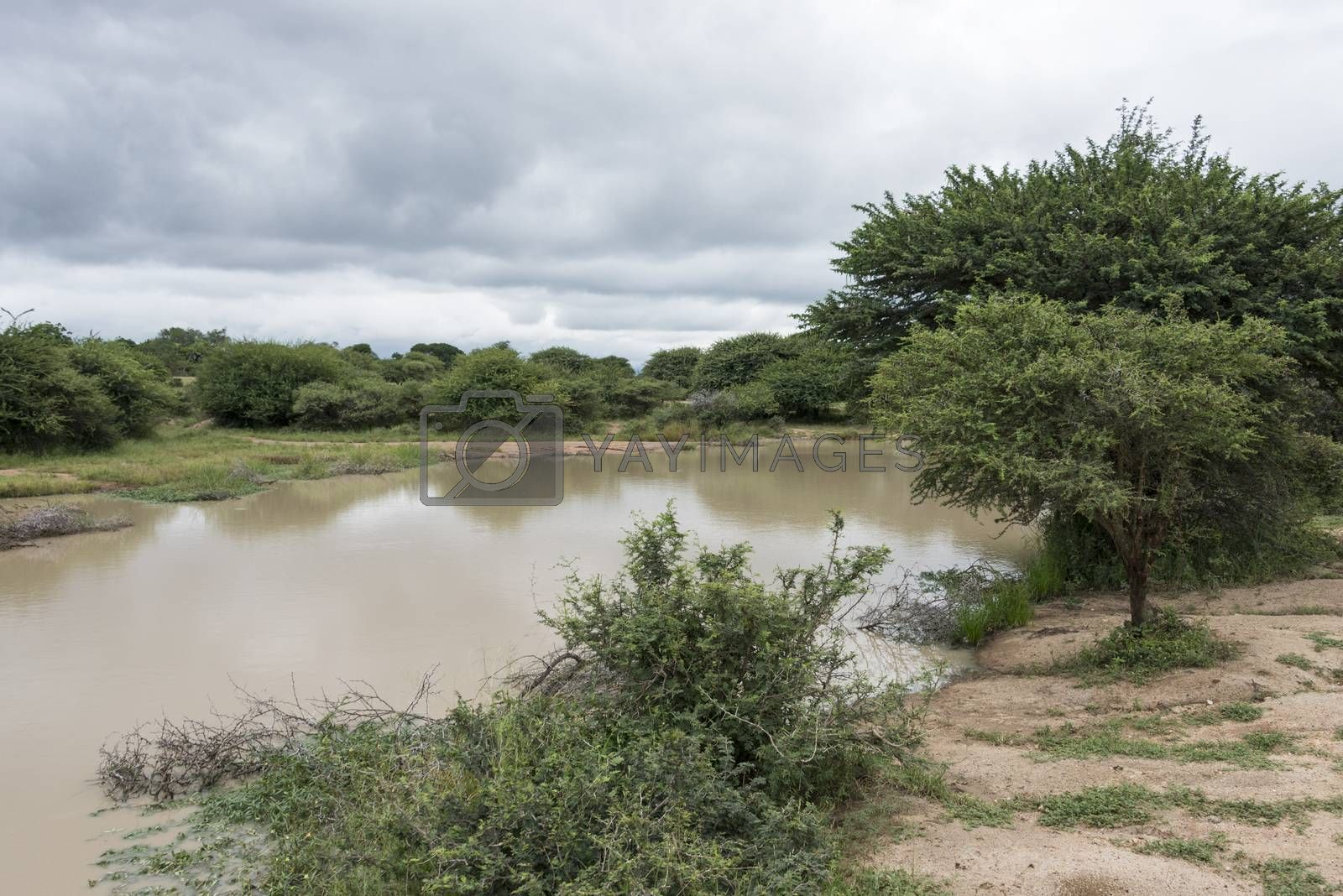 nature area with water in reserve   by compuinfoto