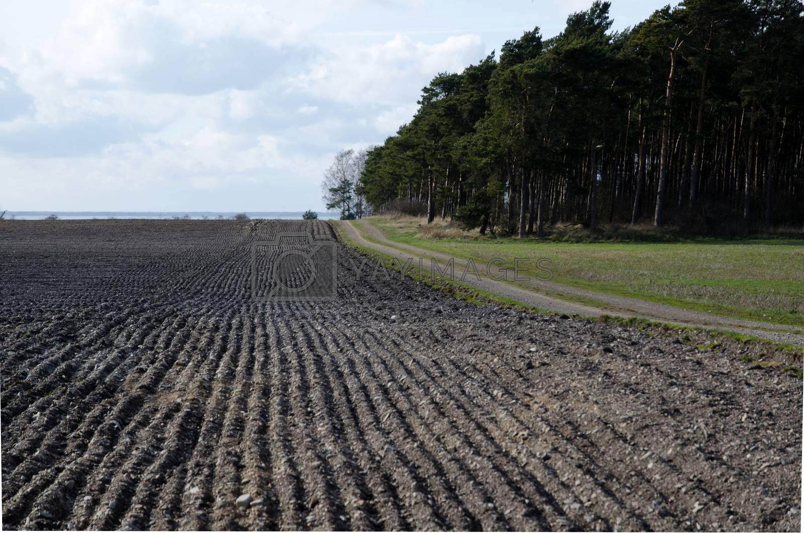 Field at springtime by olandsfokus