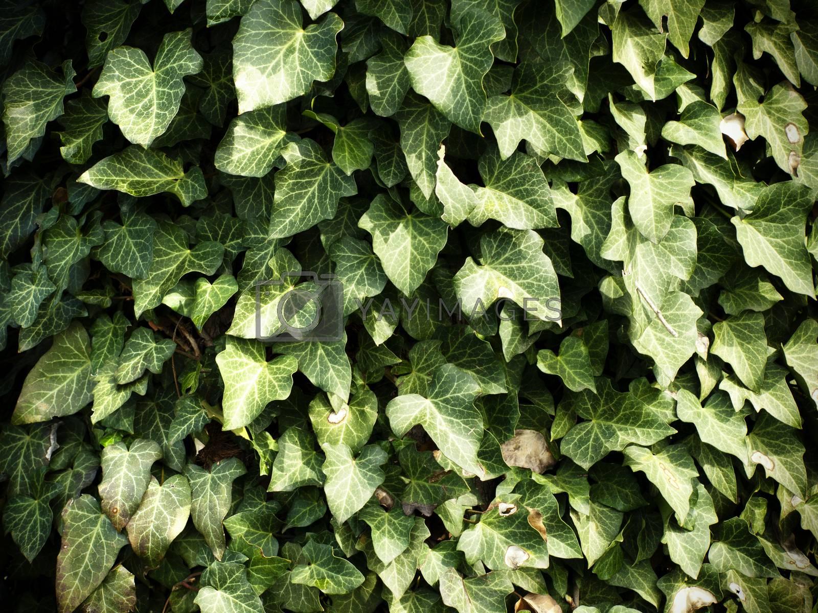 Green Leaves Background  by razvodovska