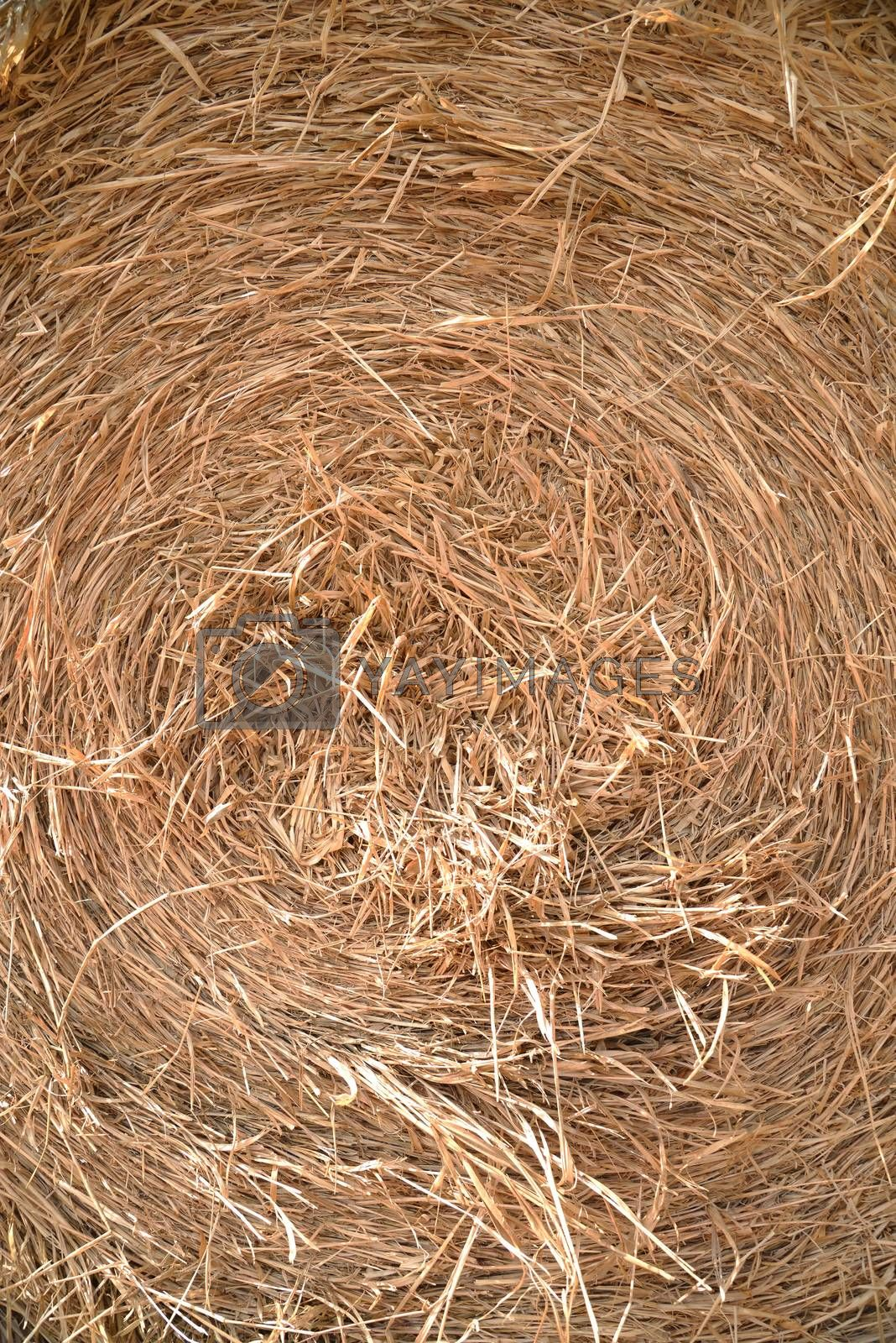 close up detailed view of stack of hay by jakgree
