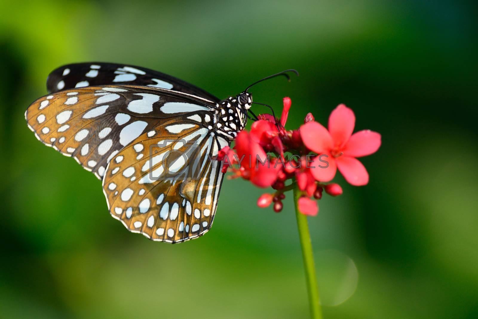 beautiful butterfly sitting in the flower by jakgree