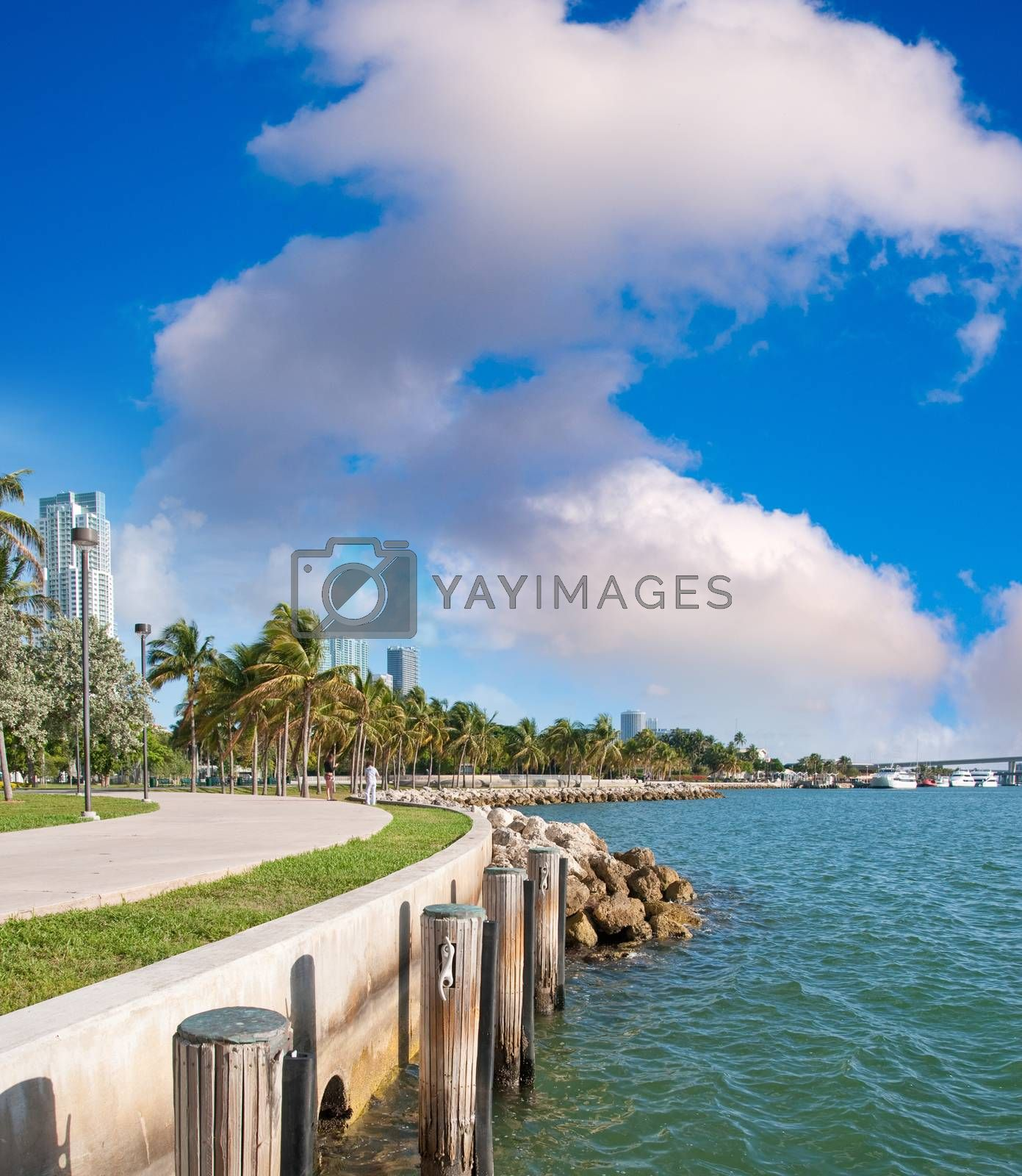 Beautiful cityscape of Miami along the sea by jovannig