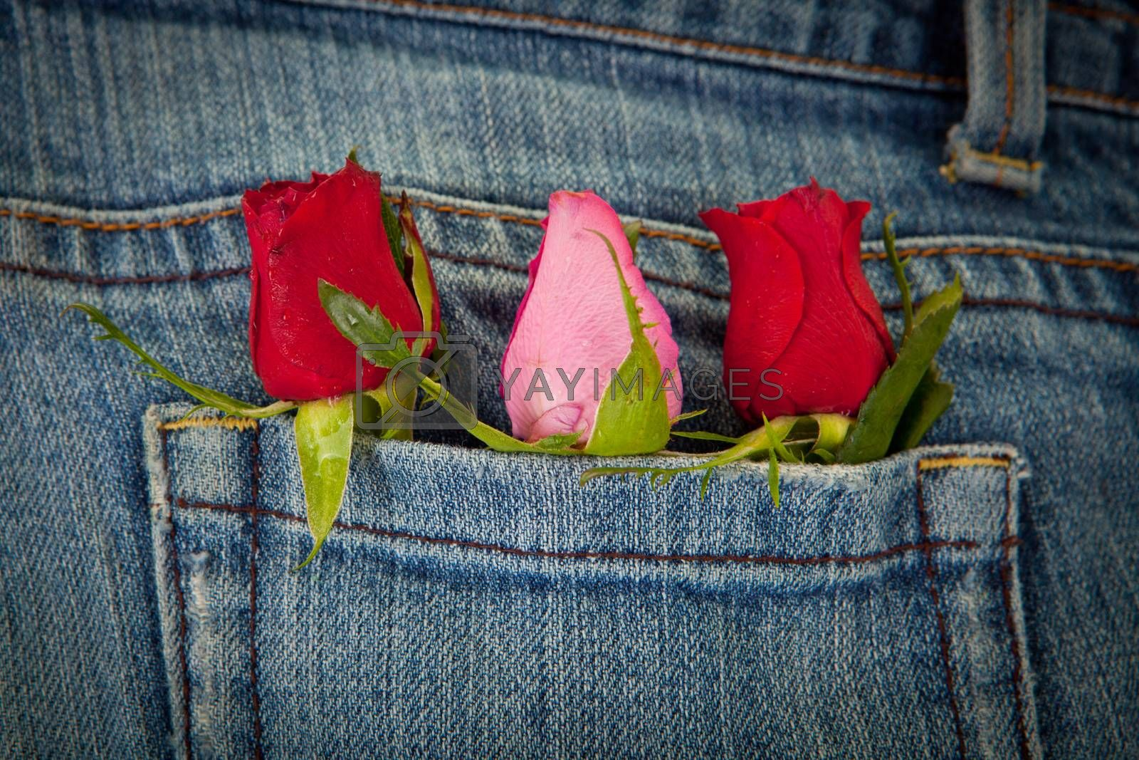 roses in pocket for valentines day concept