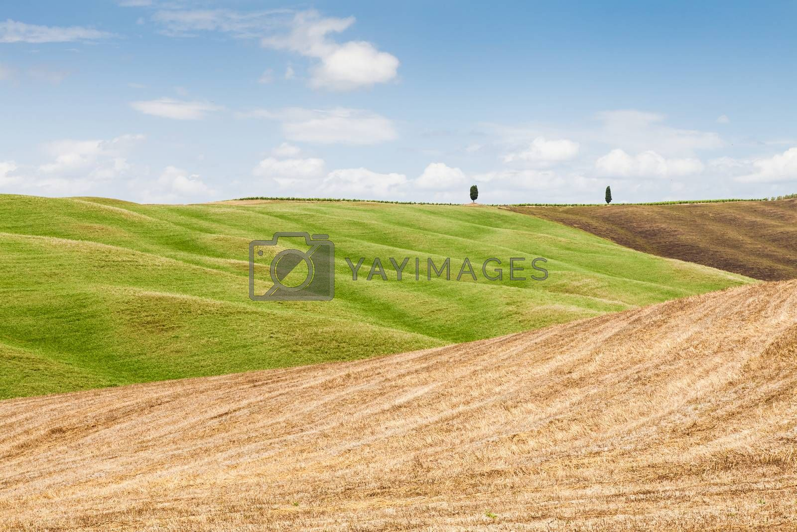 Tuscany agriculture by Perseomedusa