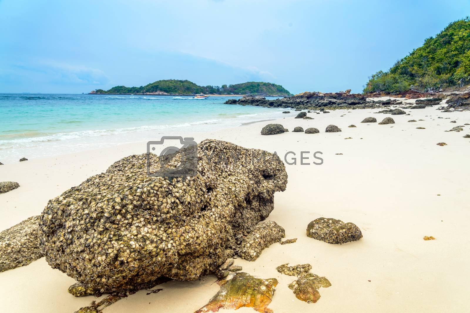 Scene Beach at  Koh Larn, Ta Yai Beach Thailand by jakgree