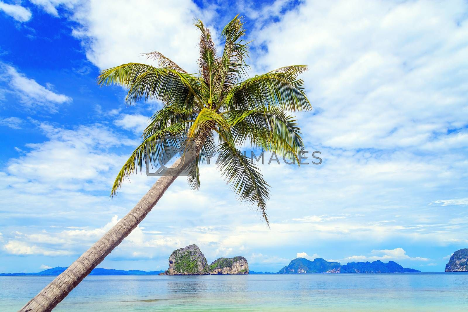 Coconut tree and beach at Ngai Island, an island in the Andaman  by jakgree
