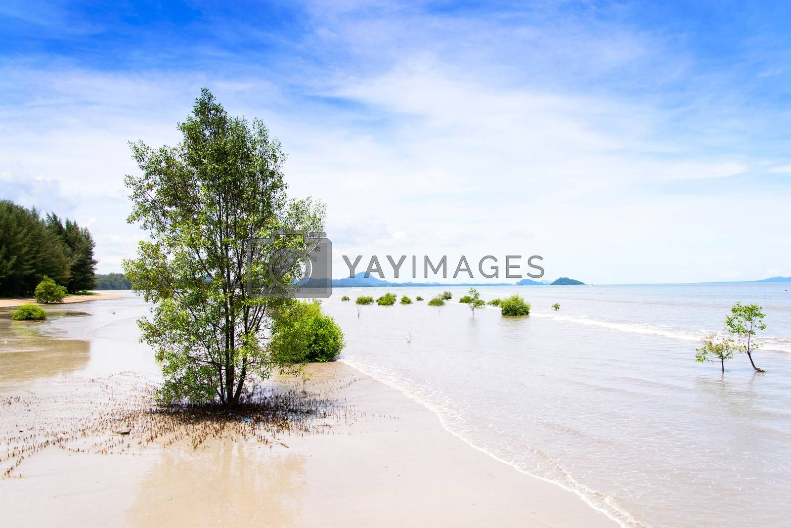 lanscape of tropical beach with mangrove tree in southern of Tha by jakgree