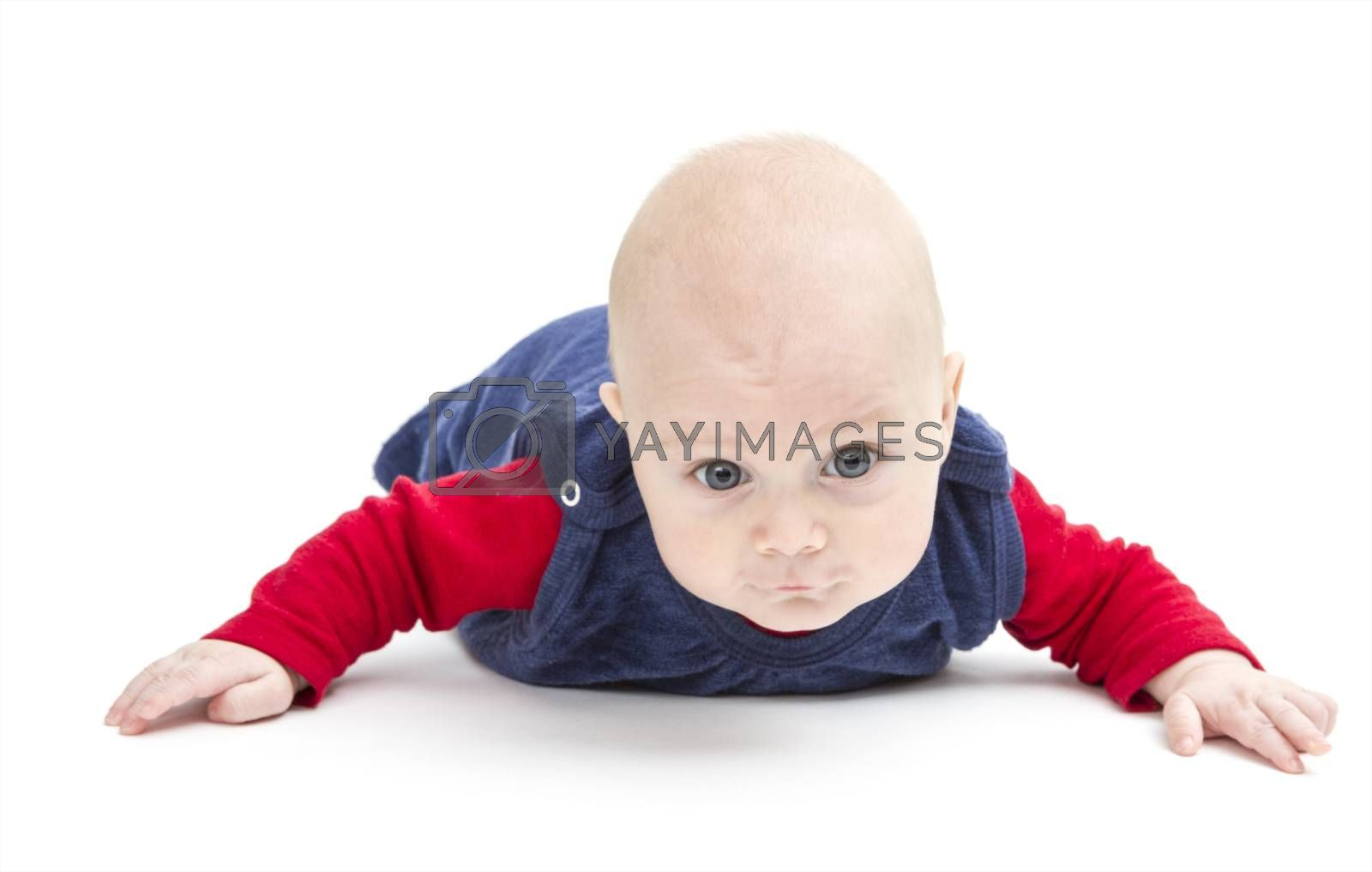 young toddler isolated in white background crawling to camera