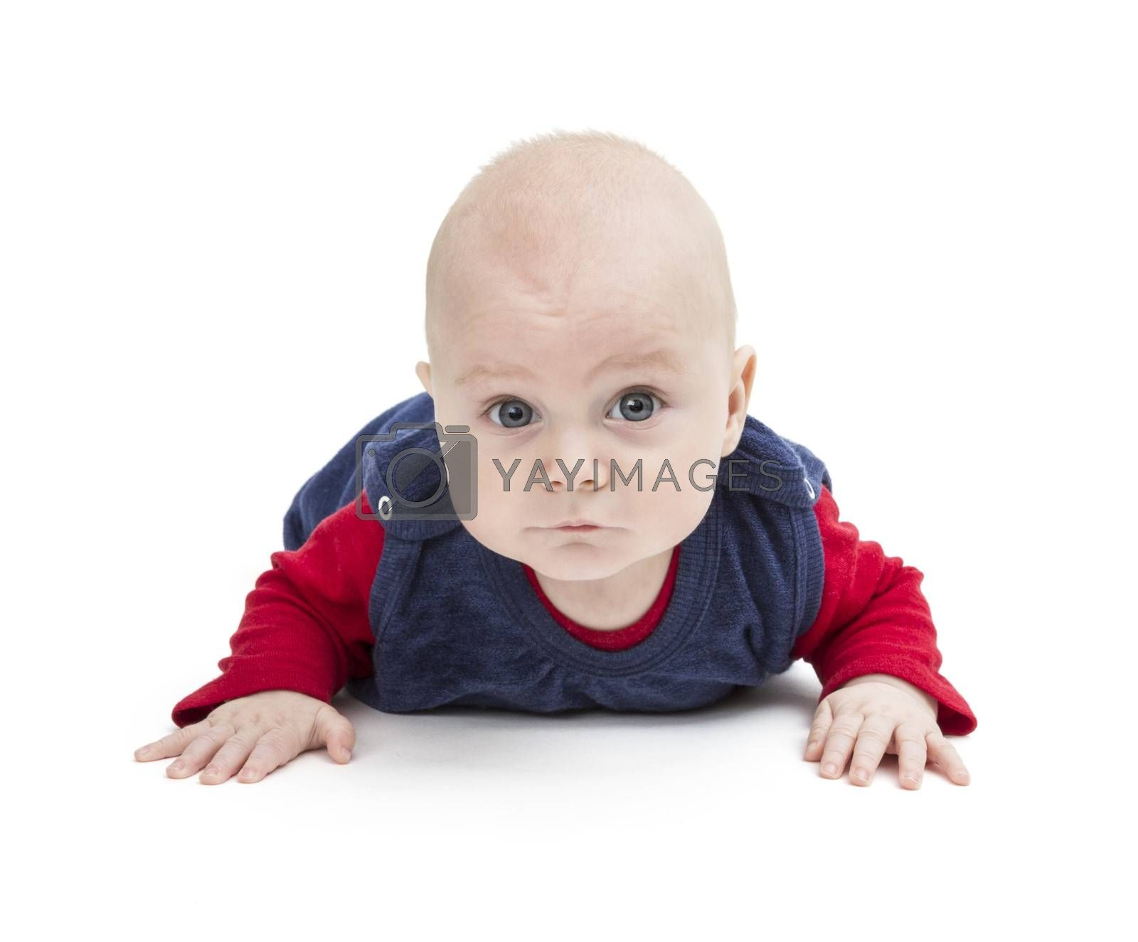 crawling baby looking into camera. isolated on white background