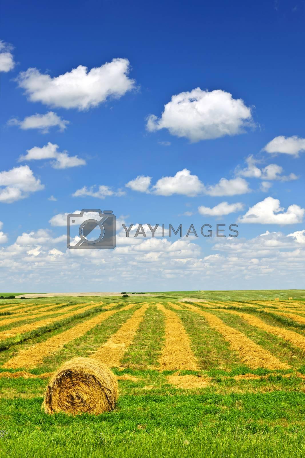 Harvested wheat on farm field with hay bale in Saskatchewan, Canada
