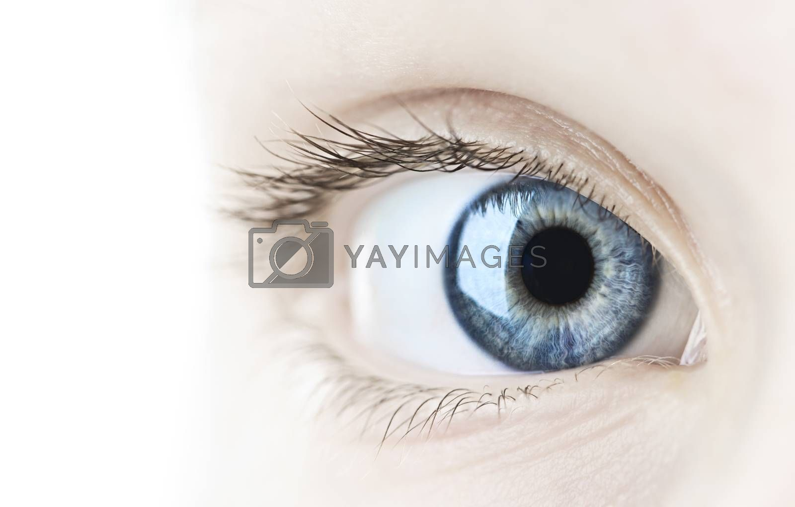 Female blue eye looking at camera close up