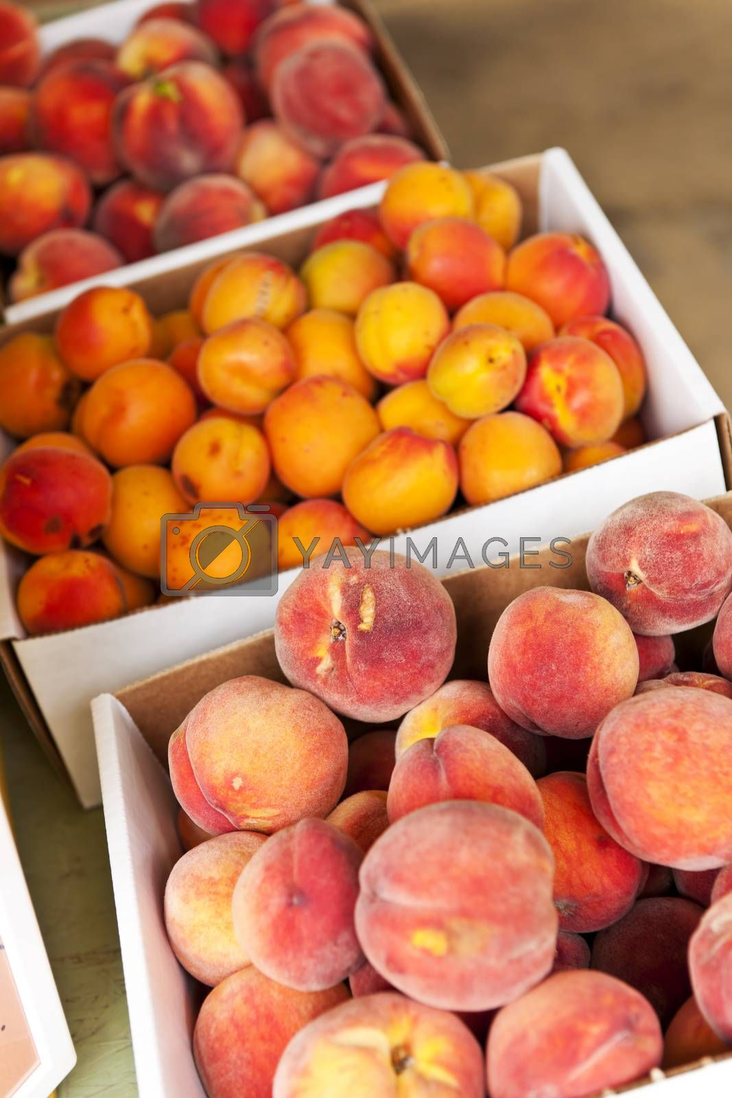 Fresh peaches and apricots fruits for sale on farmers market