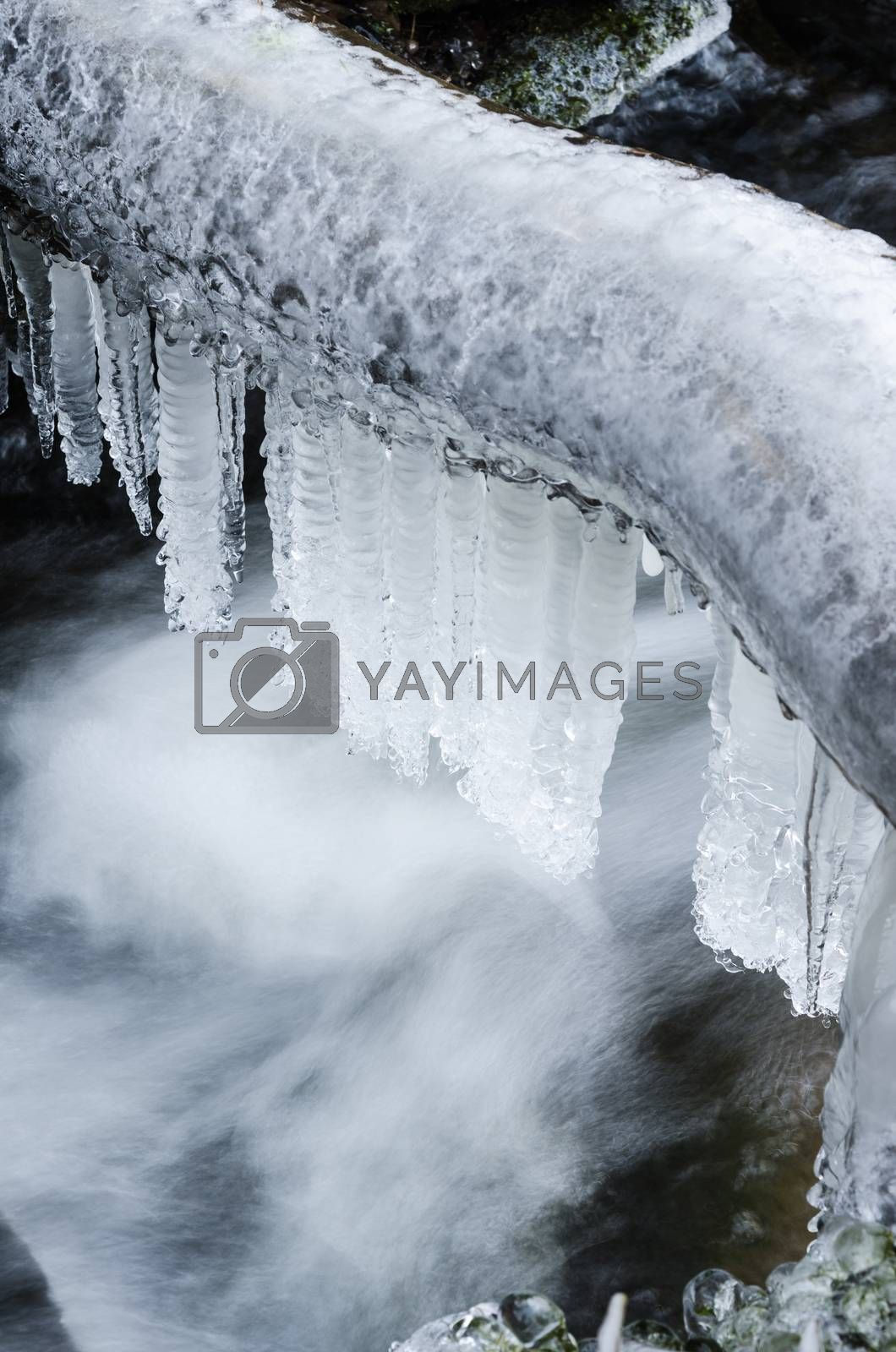 Royalty free image of Frozen icicles on water flow,  close-up by breeze09