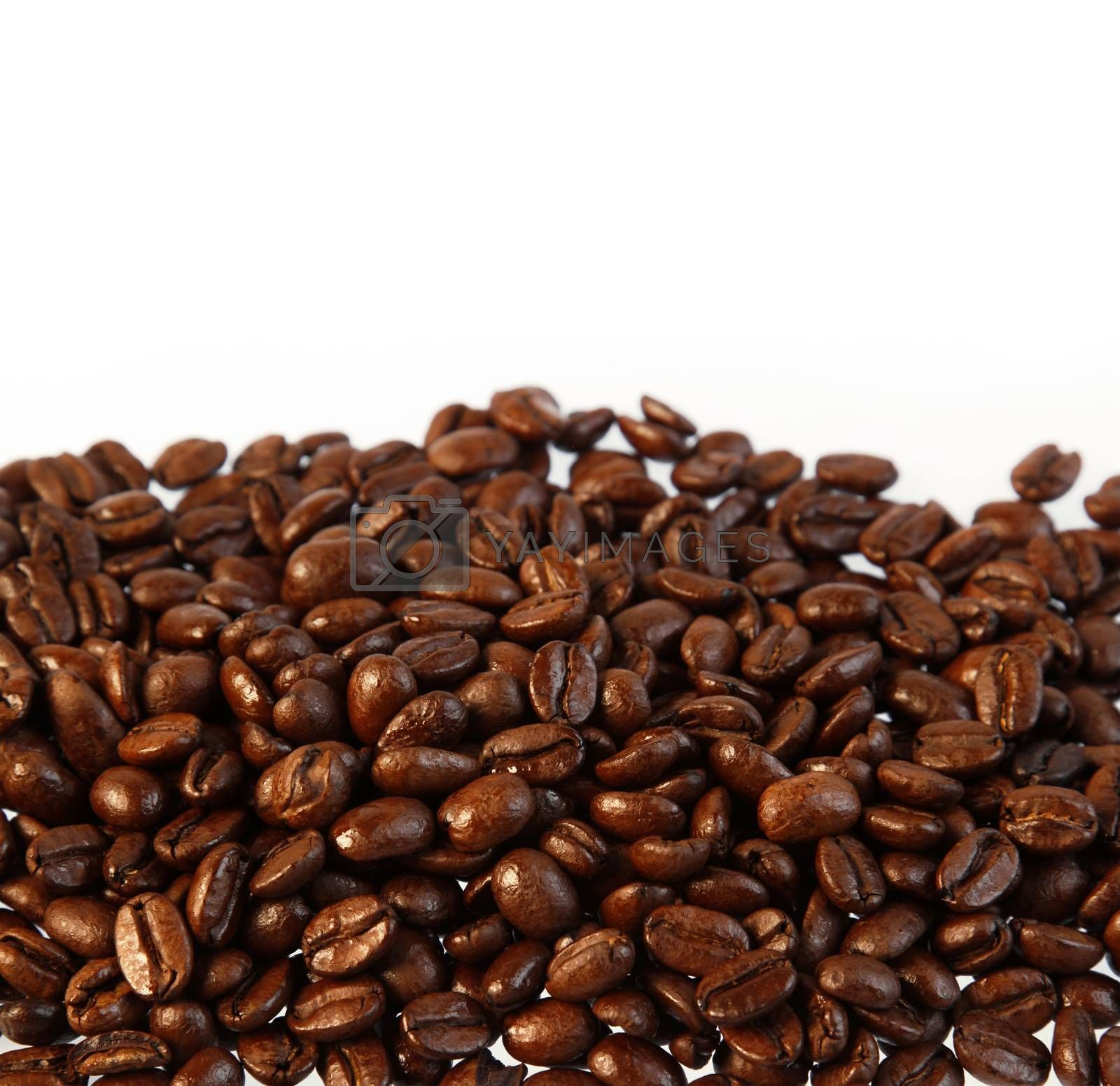 Closeup of coffee beans on plain background. Copy space