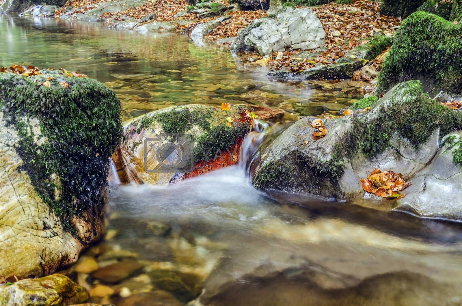 Small spring inside the Navarra's forest in Spain. Clean and detailed for precise work!