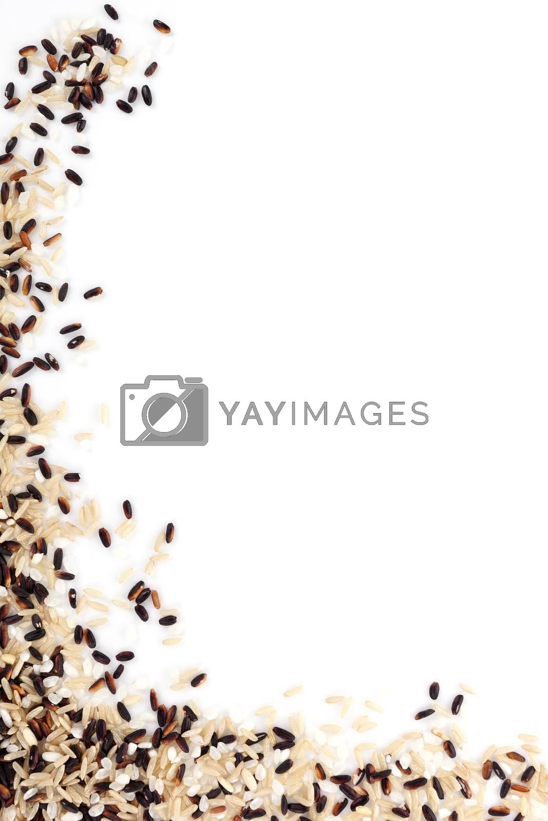 White, natural and wilde rice isolated on white background. Healthy rice background with copy space.