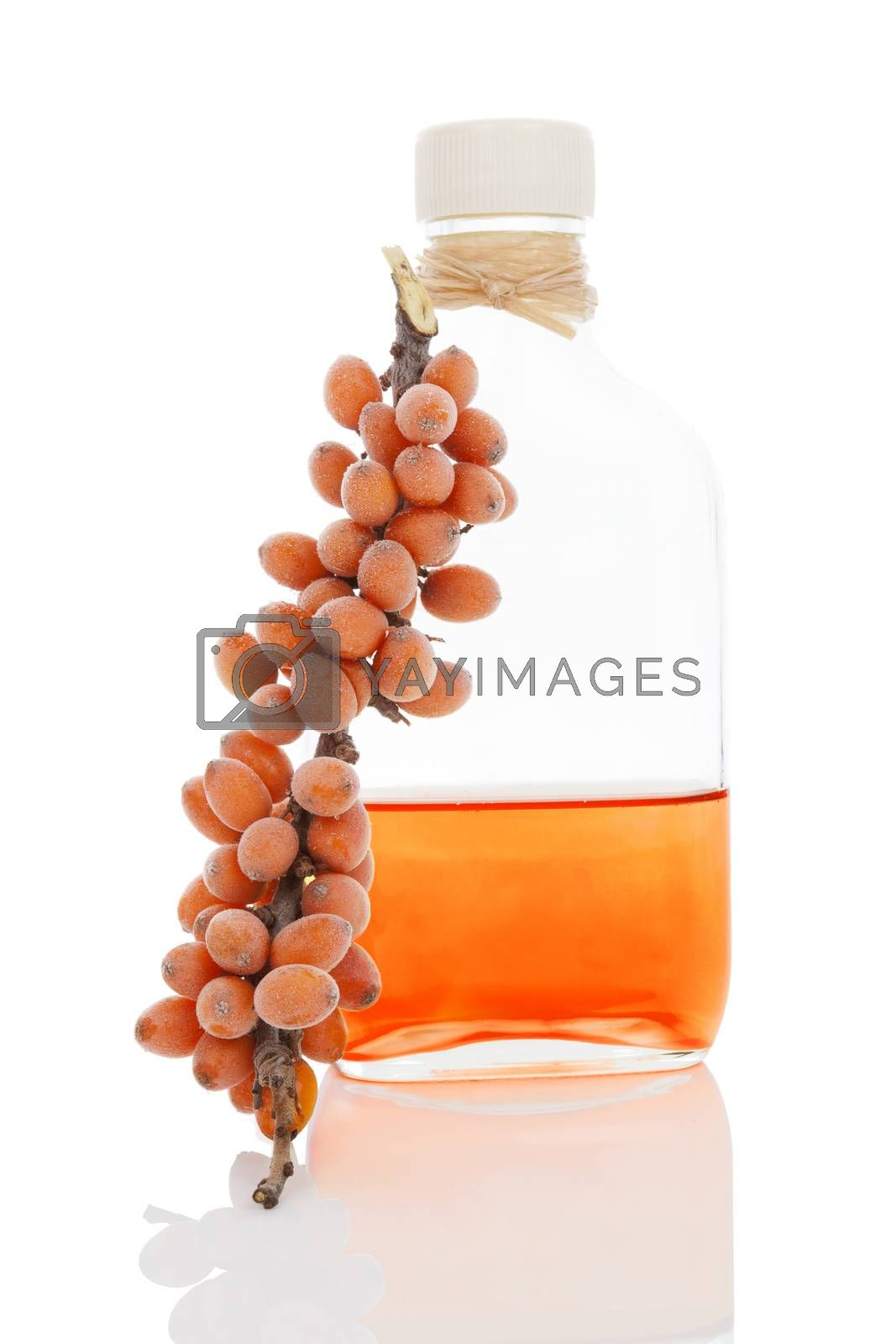 Sea buckthorn oil in glass bottle and fresh berries with frost isolated on white background. Healthy alternative medicine.