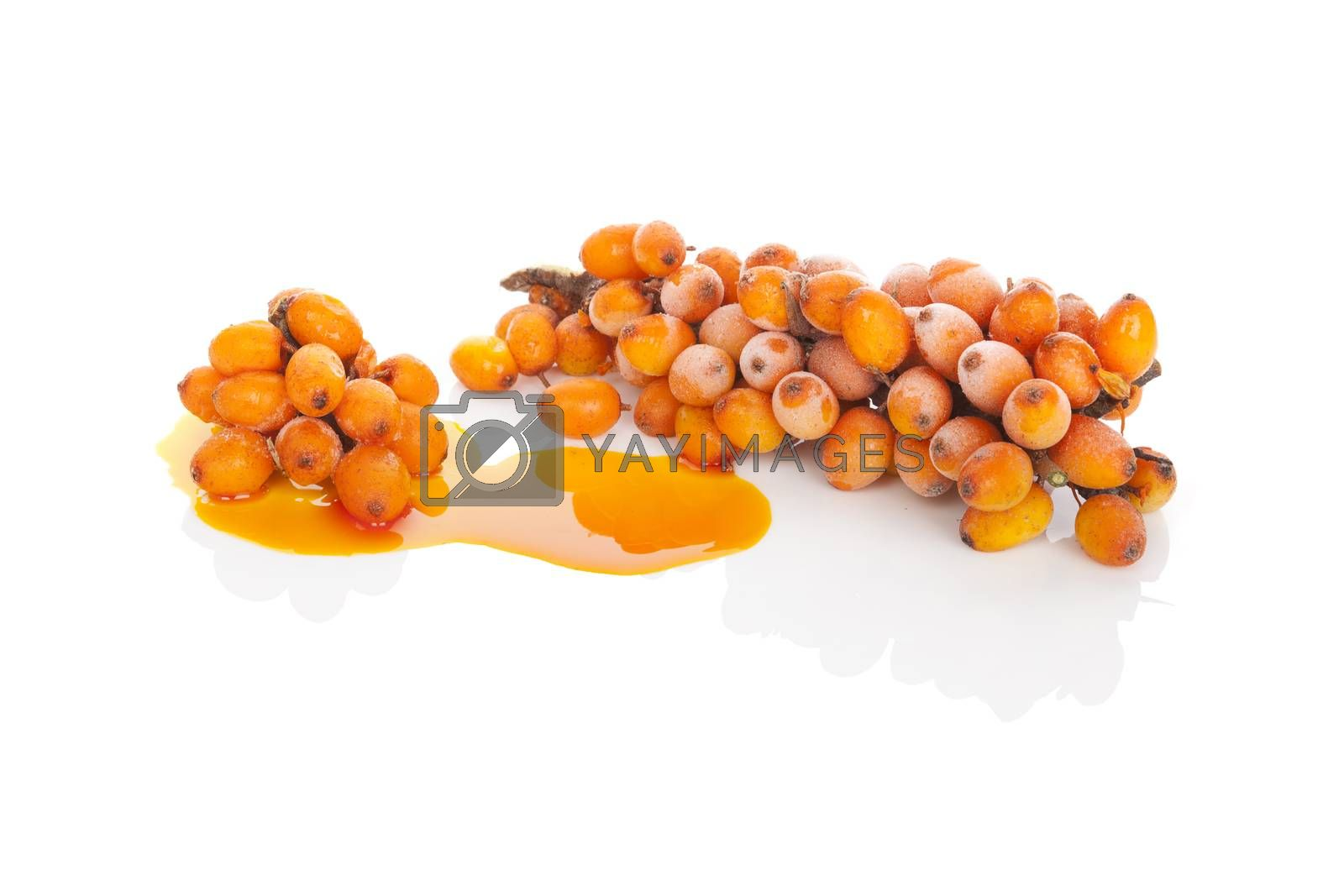 Sea buckthorn berries and sea buckthorn oil isolated on white background. Healthy fruit eating, natural detox.