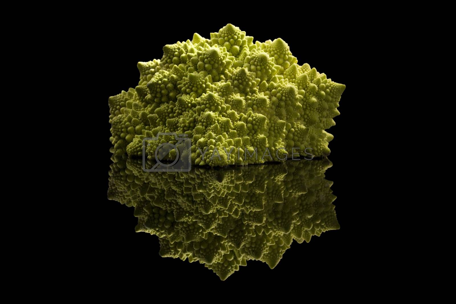 Romanesco broccoli isolated on black background with reflection. Fresh vegetable eating.