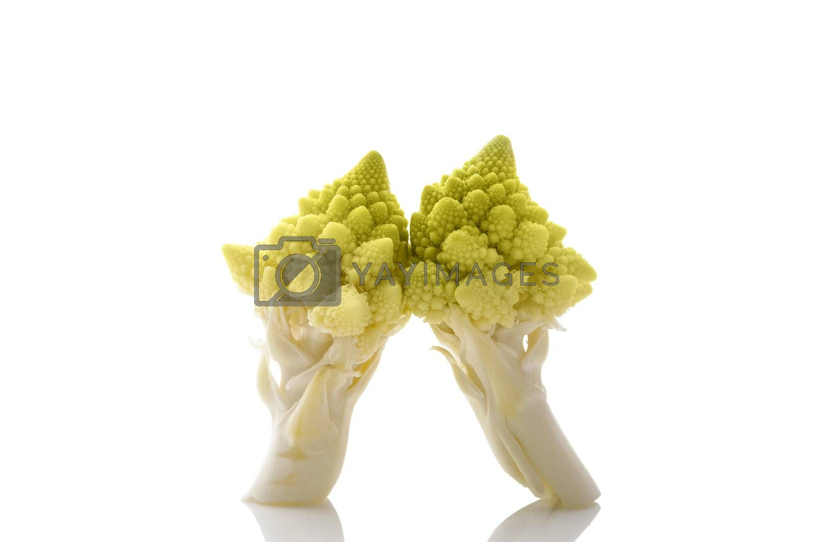 Romanesque cauliflower pieces isolated on white background with reflection. Healthy raw food diet.