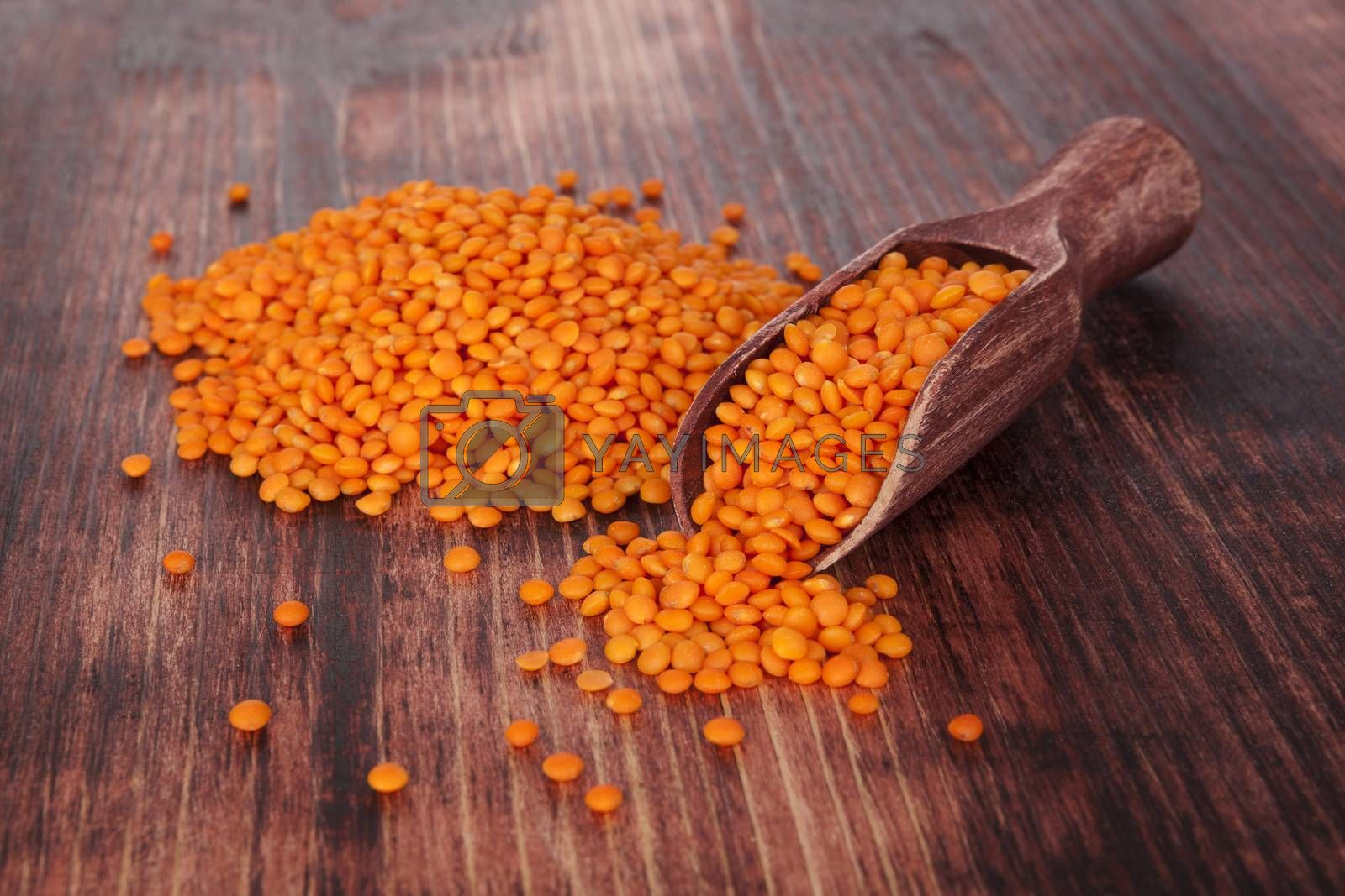 Red lentils on wooden spoon on dark wooden background. Healthy legume eating.