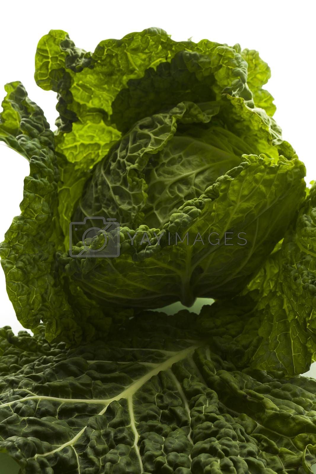 Fresh green cabbage isolated on white background.