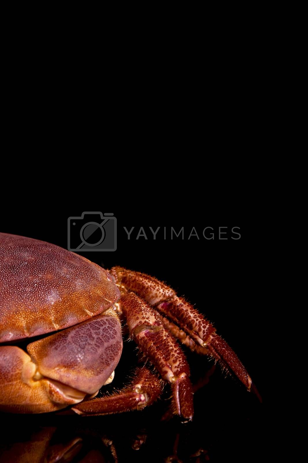 Seafood. Crab by eskymaks