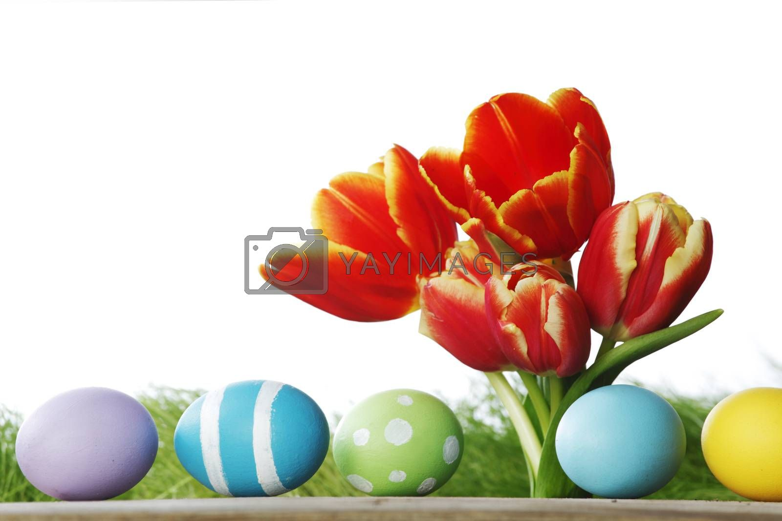 Easter decoration with tulips and colored eggs on white