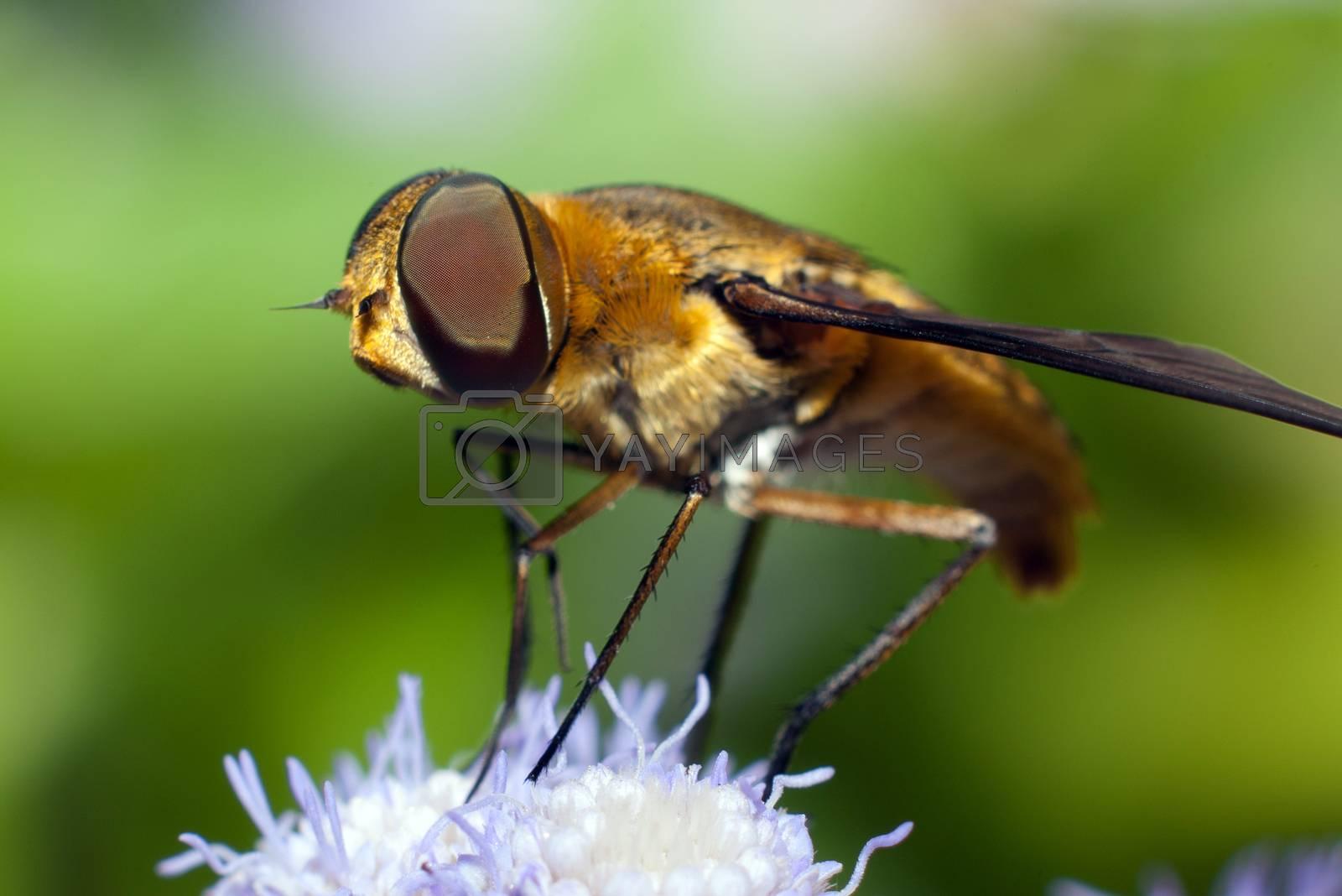 A golden bee on a flower
