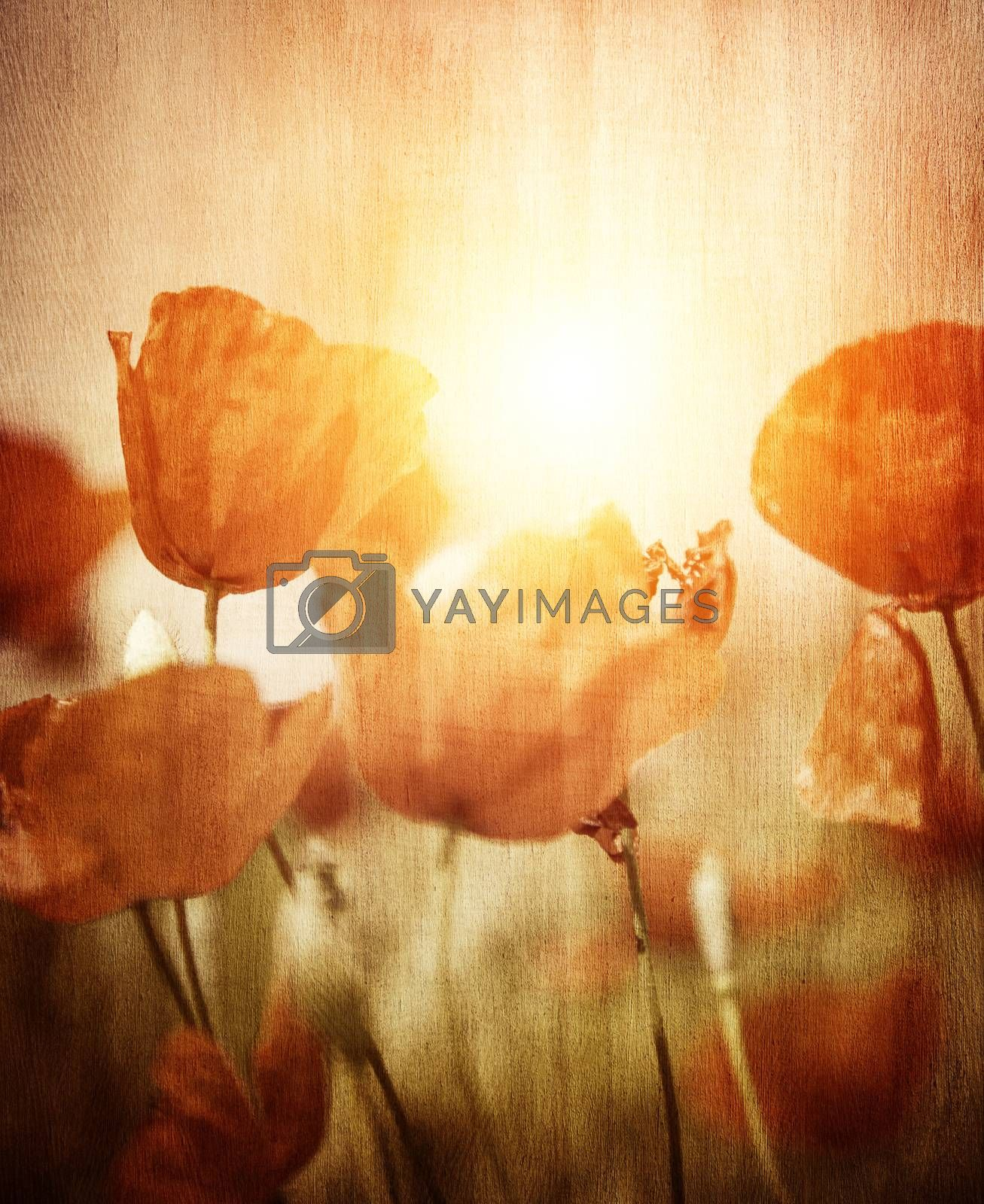 Royalty free image of Poppies field by Anna_Omelchenko