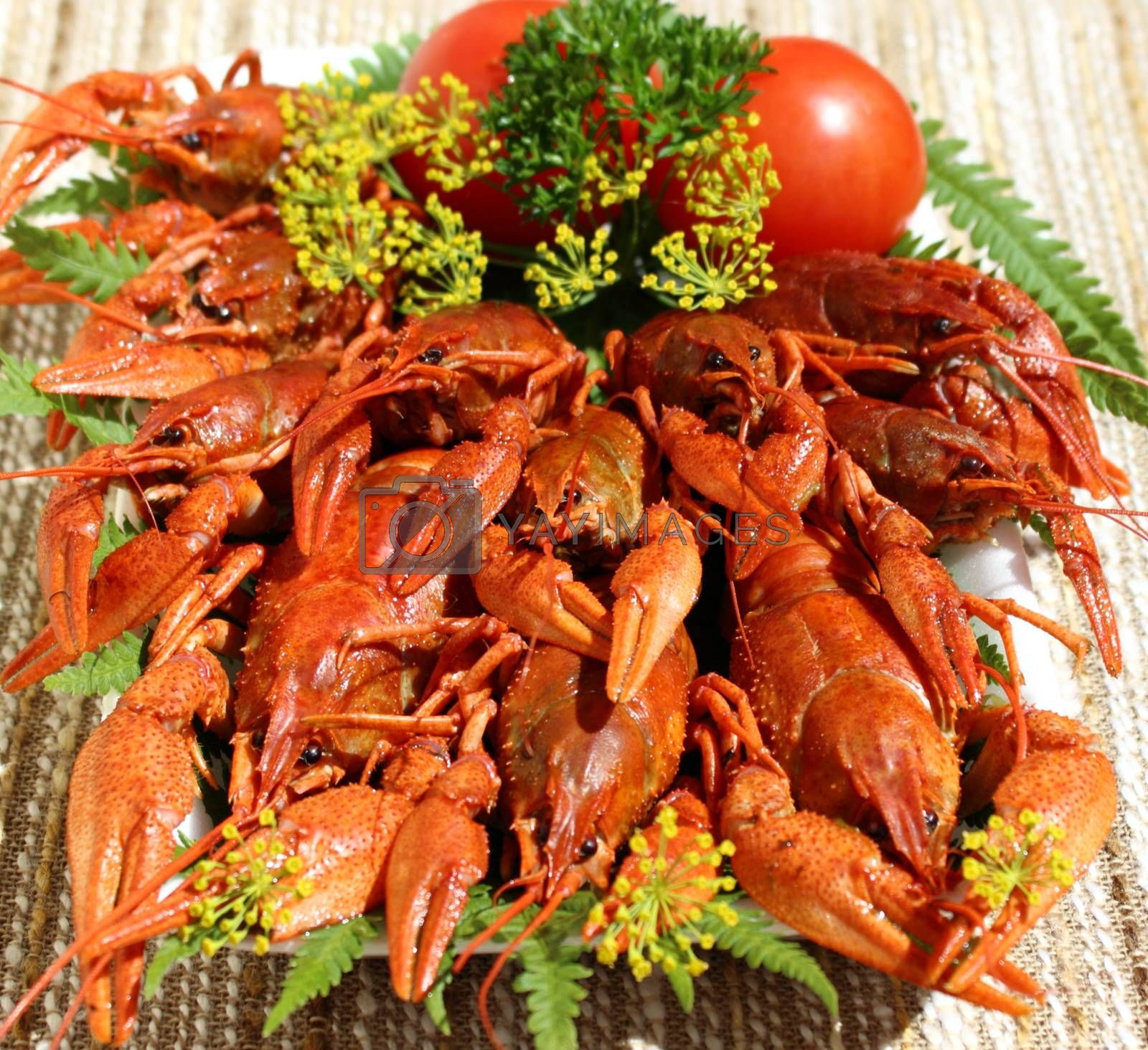 Royalty free image of Cooked crayfish by openas