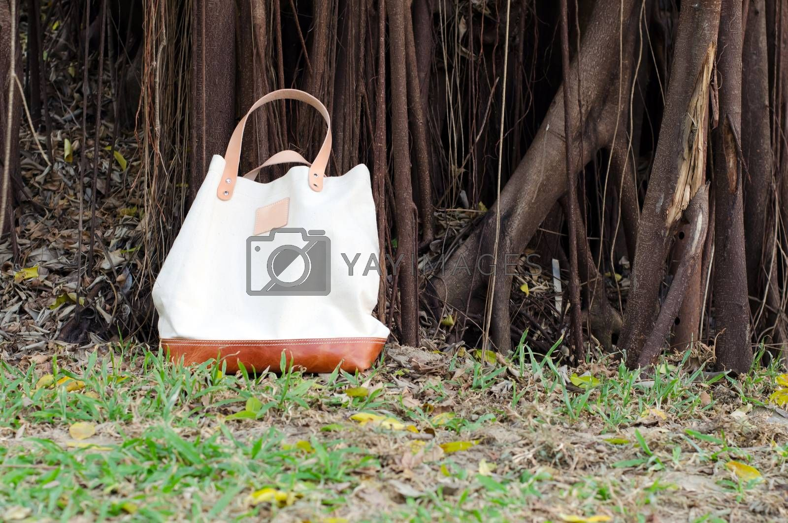Royalty free image of Canvas Bags with Banyan Tree by siraanamwong