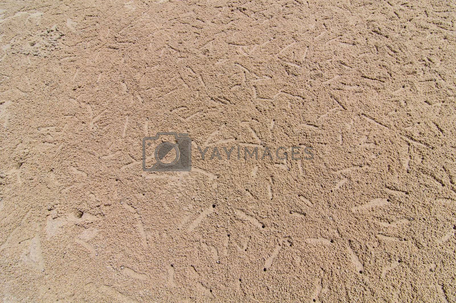 Royalty free image of Crab hole on the beach by Sorapop