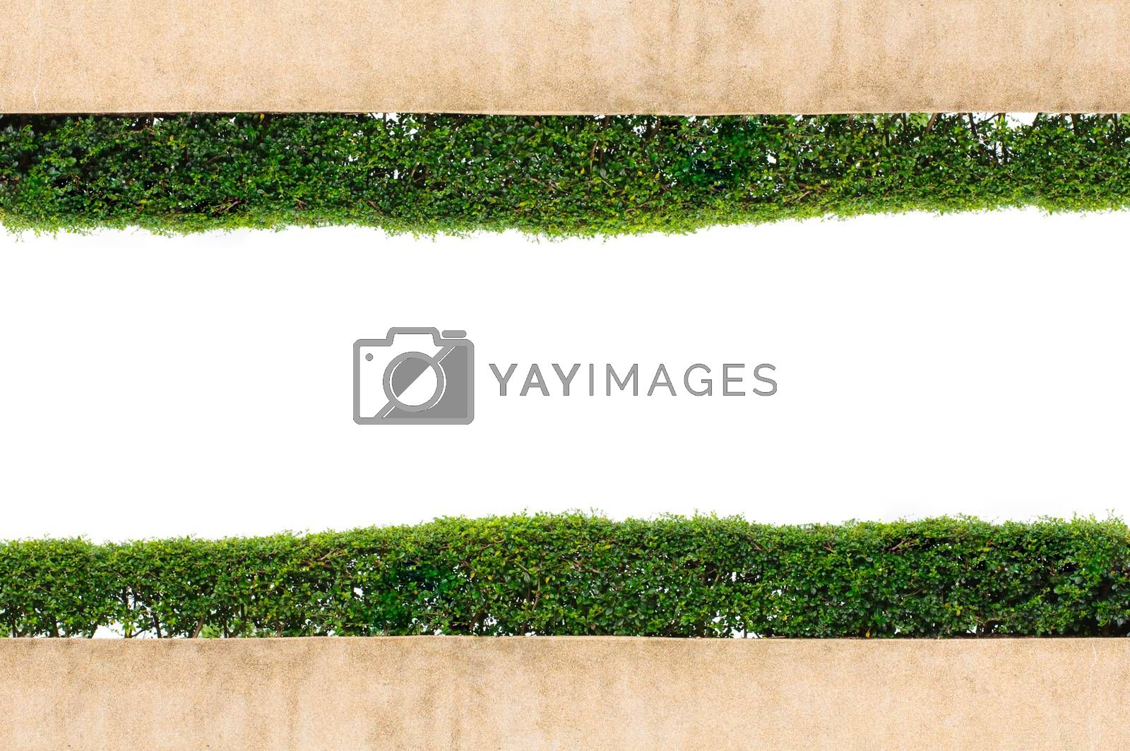 Royalty free image of Frame green grass isolated on white background by Sorapop