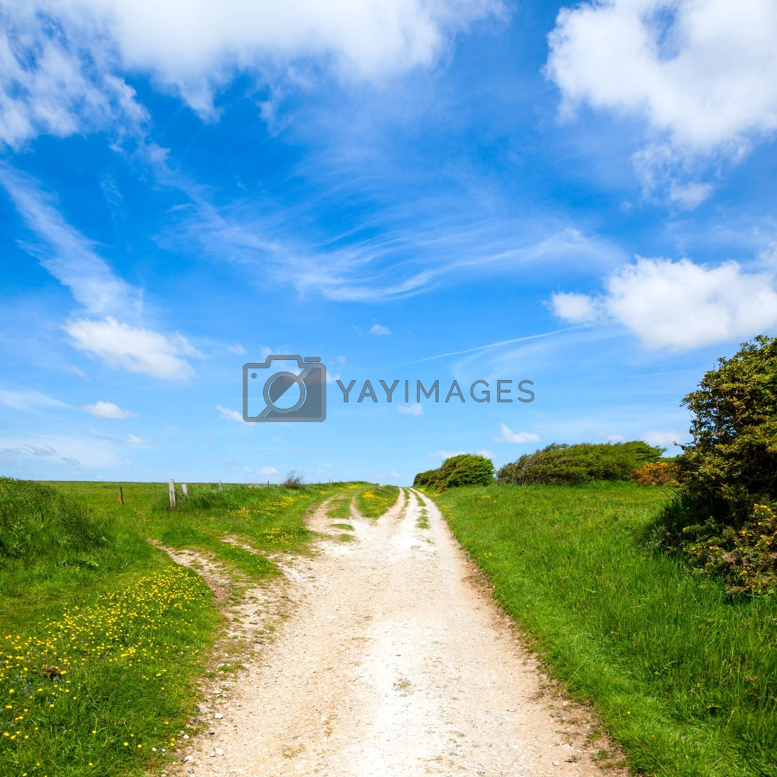 Royalty free image of North Downs Way path by naumoid