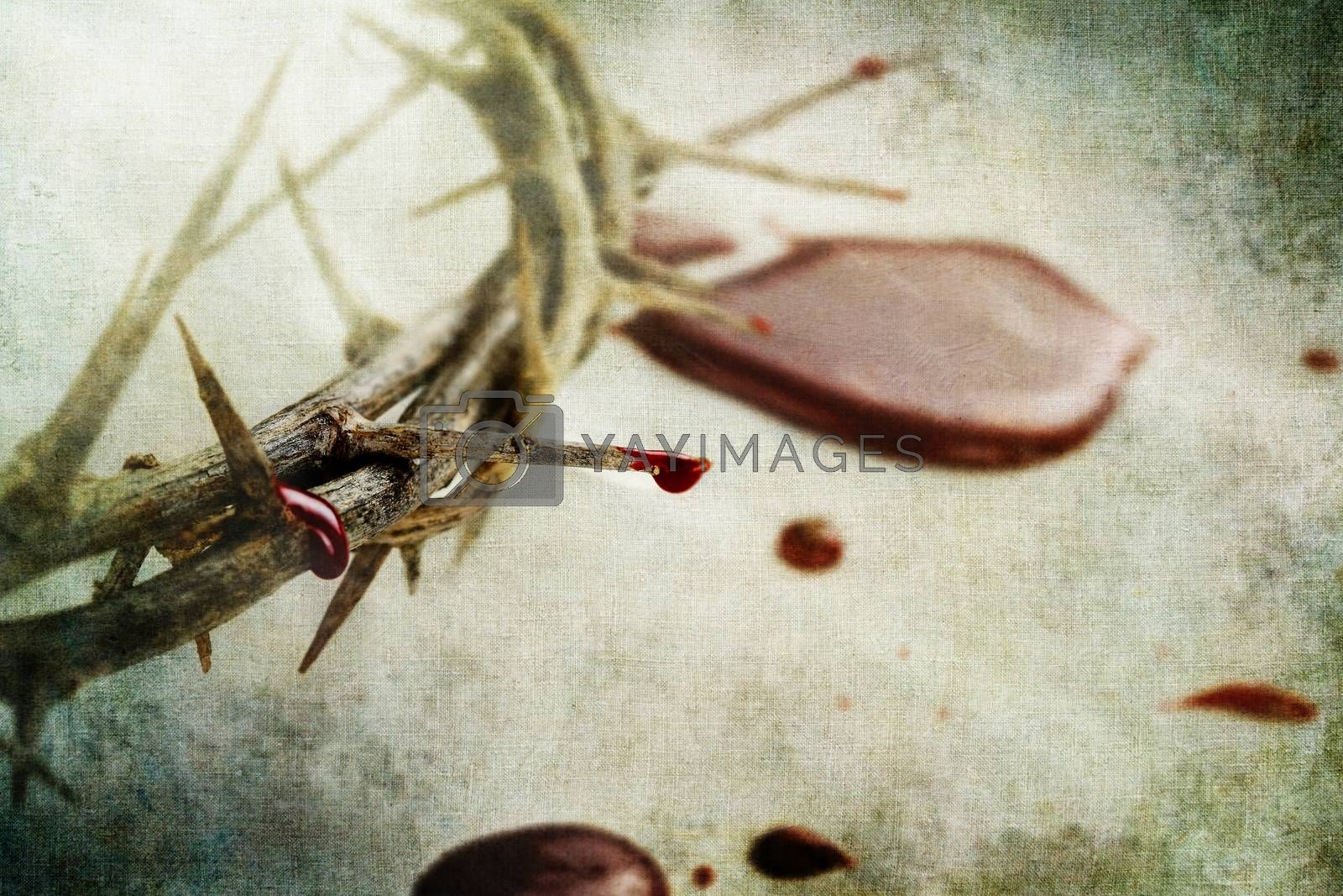 Royalty free image of Blood and Thorns by StephanieFrey