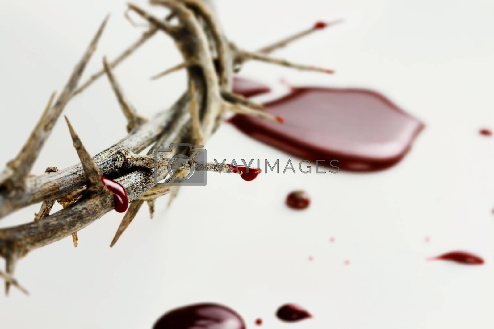 Royalty free image of Drops of  Blood by StephanieFrey